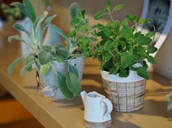 花と緑の器たち_3