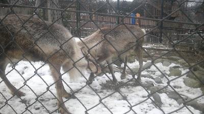 雪の動物園1