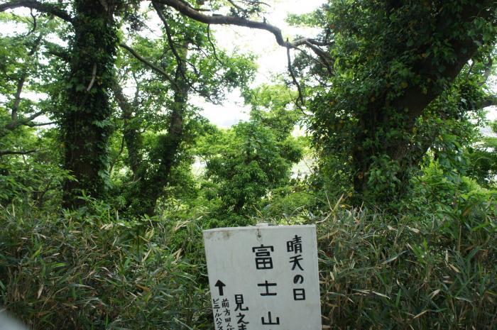 佐倉城14