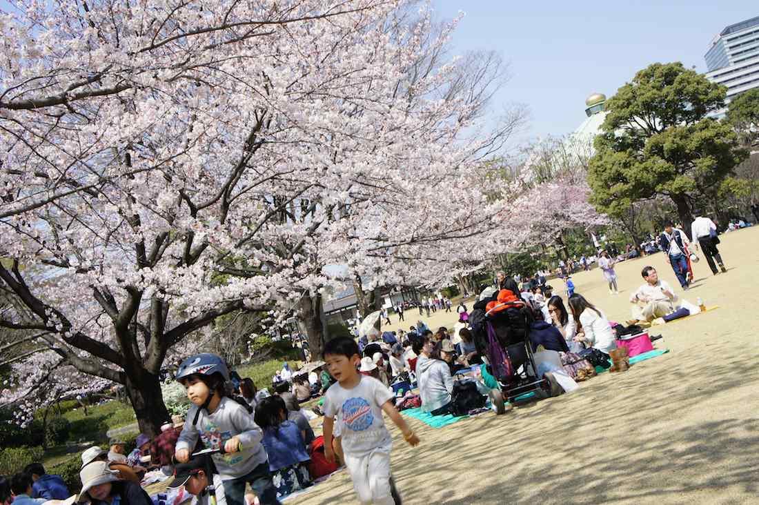 千鳥ヶ淵の桜 北の丸公園