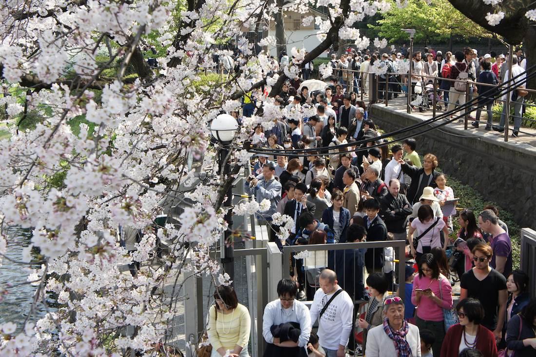 千鳥ヶ淵の桜 ボート