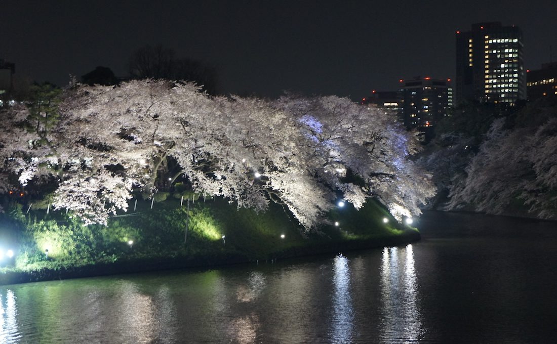 【桜の名所】 東京 千鳥ヶ淵で桜を見てきた(夜ver)