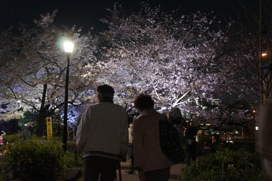 千鳥ヶ淵緑道の夜桜を見る素敵なご夫婦