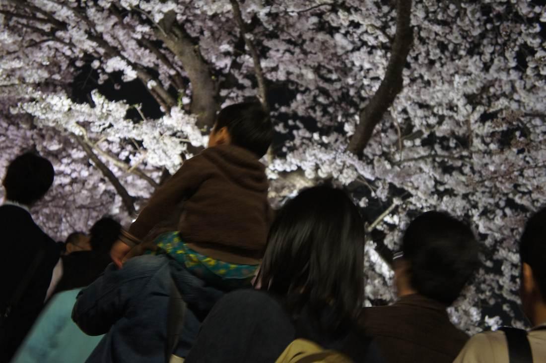 千鳥ヶ淵緑道の夜桜を見る家族