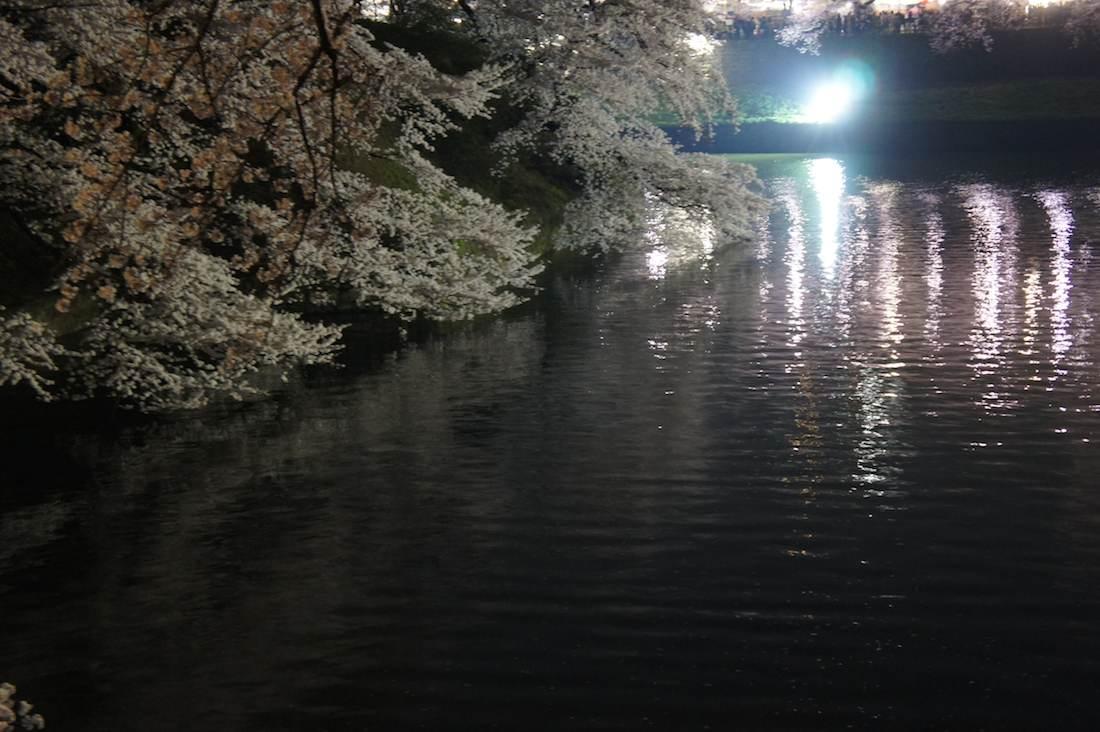光る千鳥ヶ淵緑道の夜桜