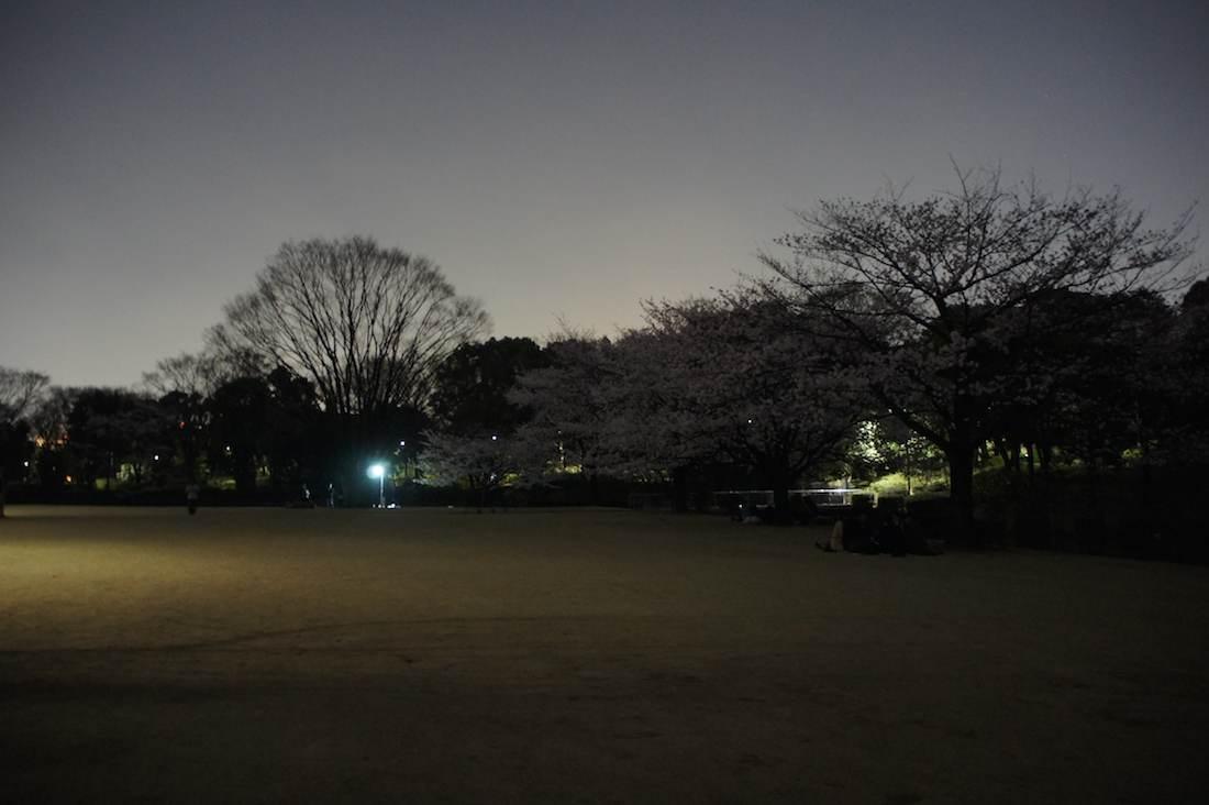 かなり暗い夜の北の丸公園