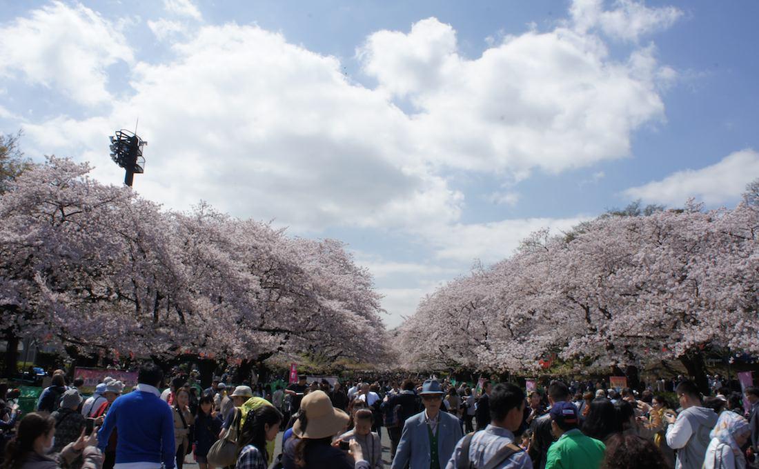 【桜の名所】 東京 上野恩賜公園で桜を見てきた(昼ver)