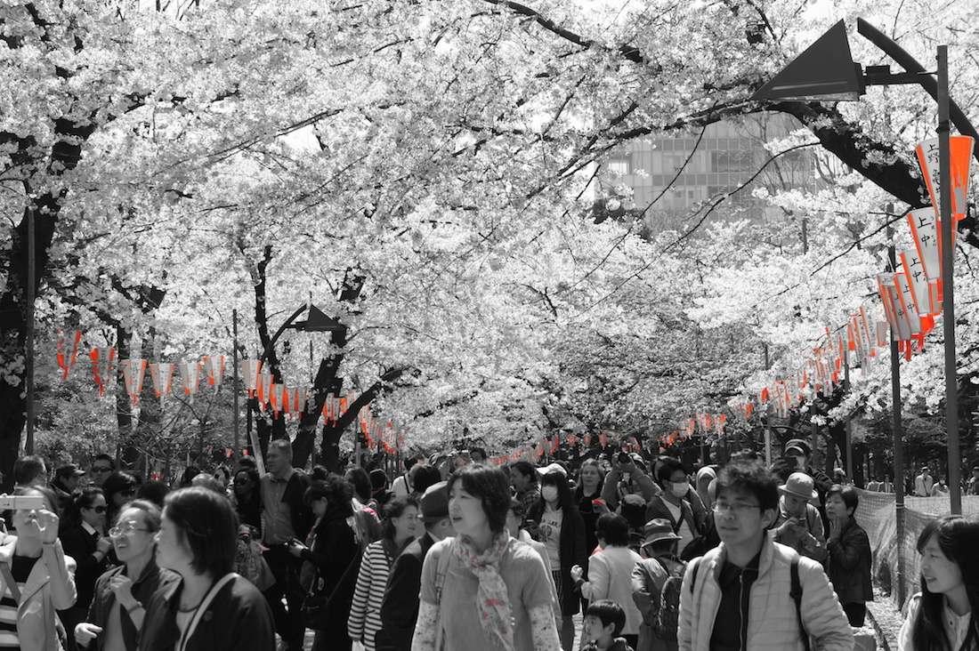 上野恩賜公園の桜とぼんぼり