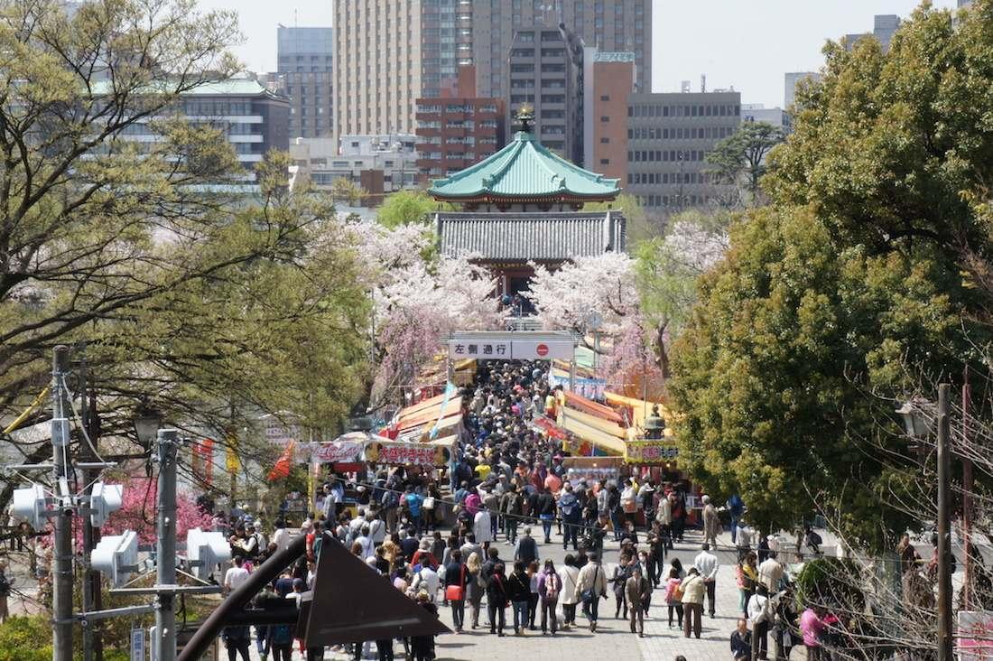 上野恩賜公園、不忍池の桜
