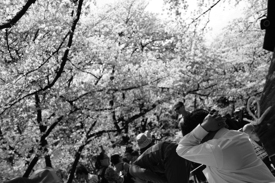 上野のお花見スポット