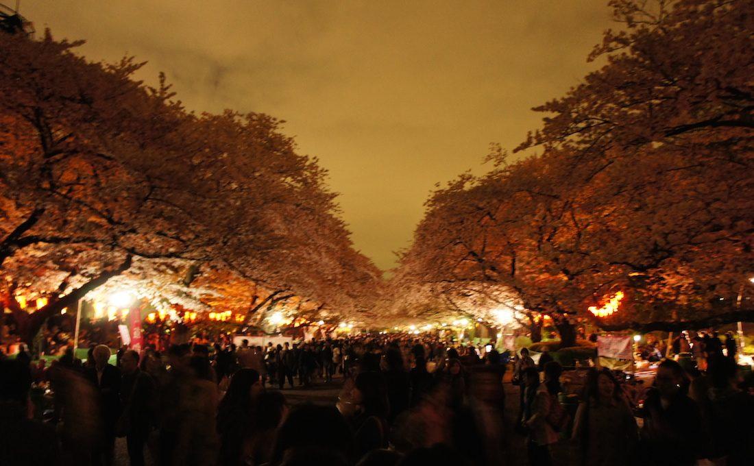 【桜の名所】 東京 上野恩賜公園で桜を見てきた(夜ver)