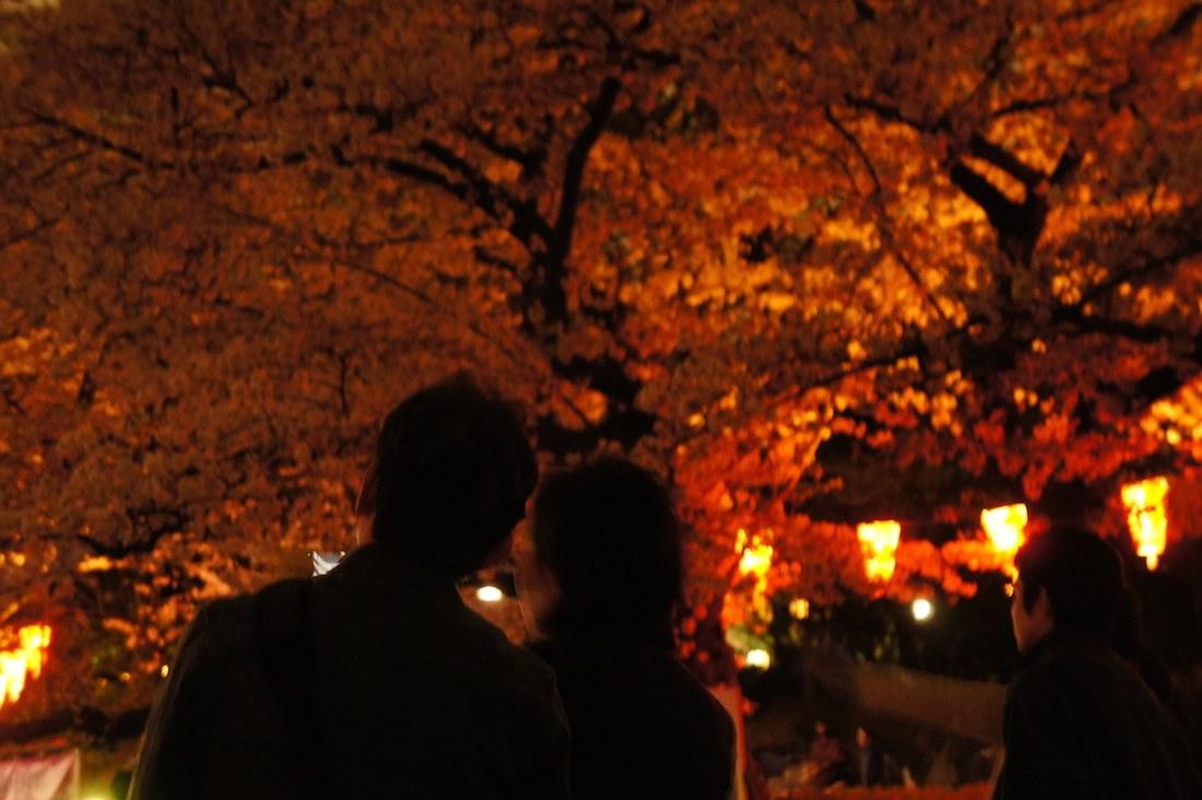 上野恩賜公園の夜桜の下でデート