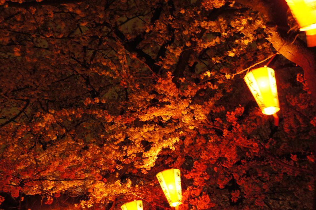 上野恩賜公園の夜桜