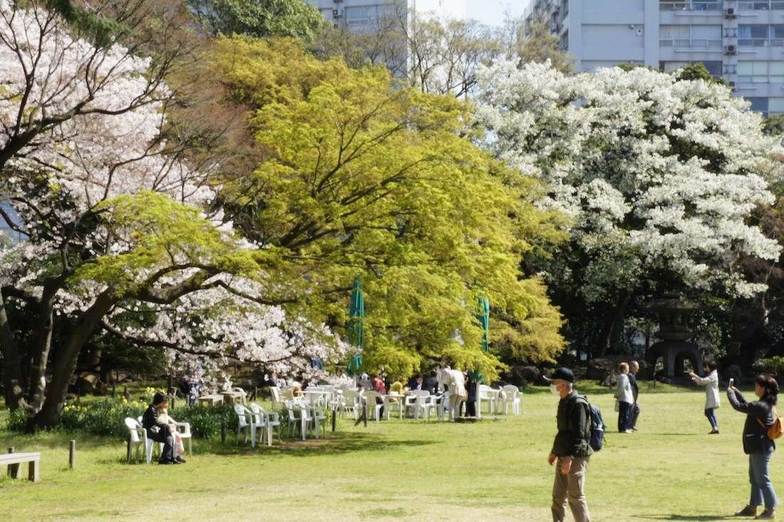 【桜の隠れた名所】 旧岩崎邸で桜を見てきた
