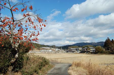 15.1.10田原柿