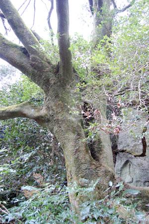15.2.5樹木幹