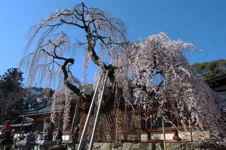 15.3.27氷室神社