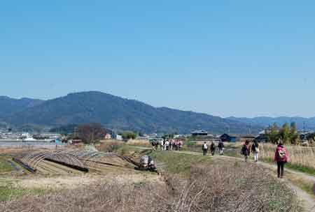 15.3.26大和川沿い