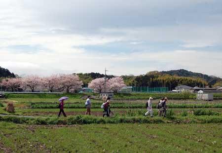 15.4.5桜