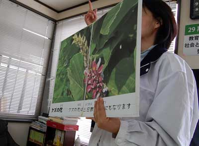 15.4.9葛の花