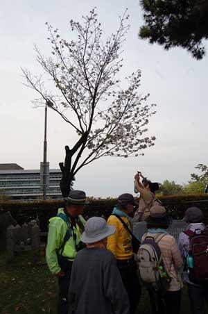 15.4.23登円堂跡