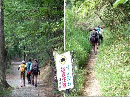 15.5.28松尾山へ