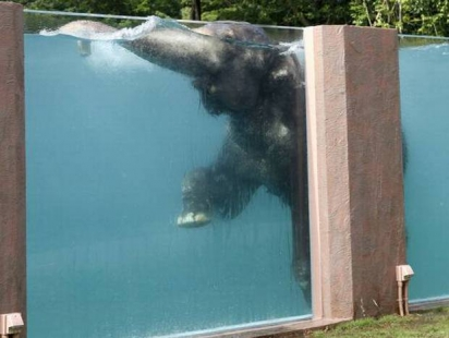 zoo elephant pool