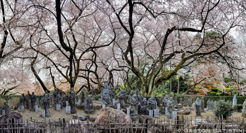 cherry-blossom-sakura-11.jpg