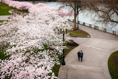cherry-blossom-sakura-13.jpg