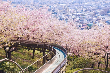 cherry-blossom-sakura-30.jpg