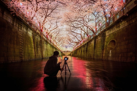 cherry-blossom-sakura-7.jpg