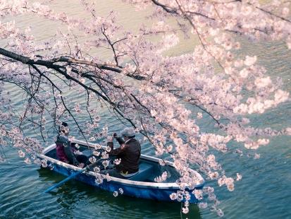 cherry-blossom-sakura-9.jpg