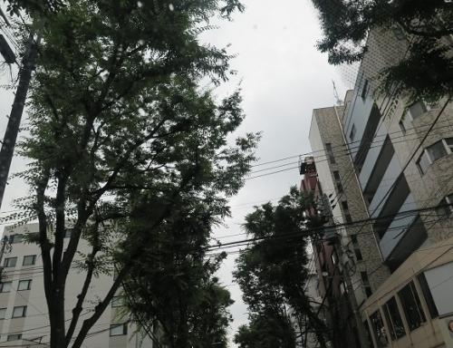 東京 ケヤキ並木