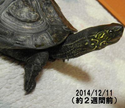 20141211-a.jpg