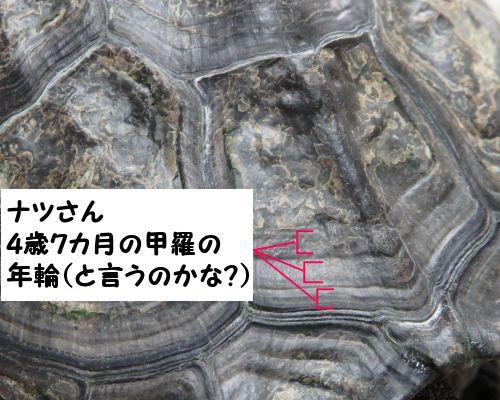 20150321-05.jpg