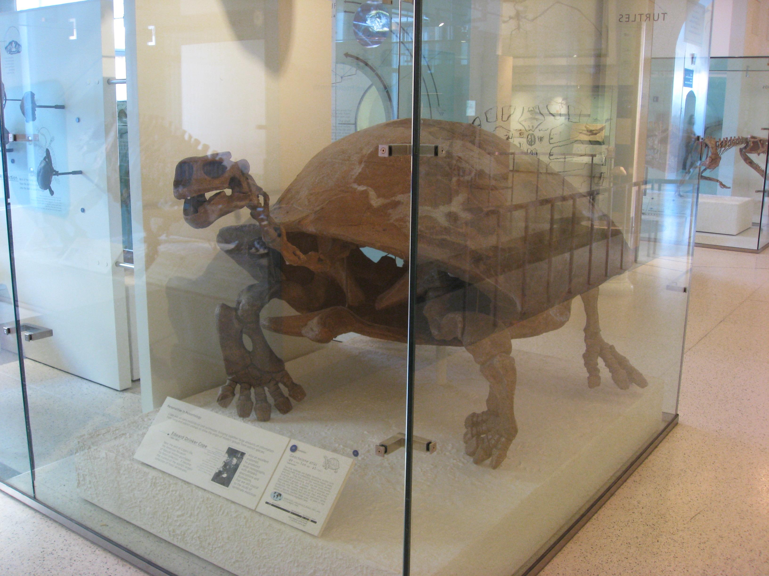 AMNH20141114c
