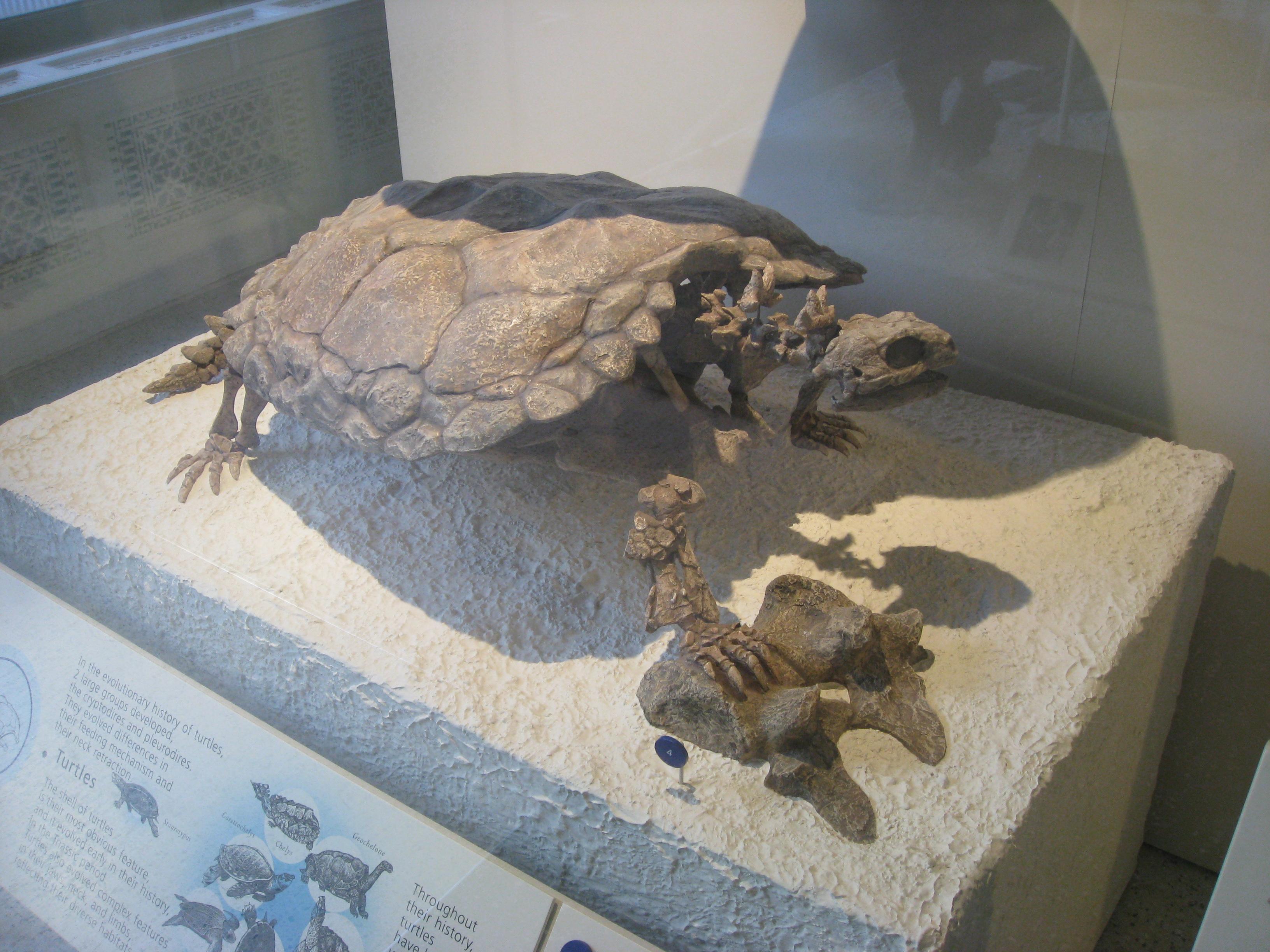 AMNH20141114e