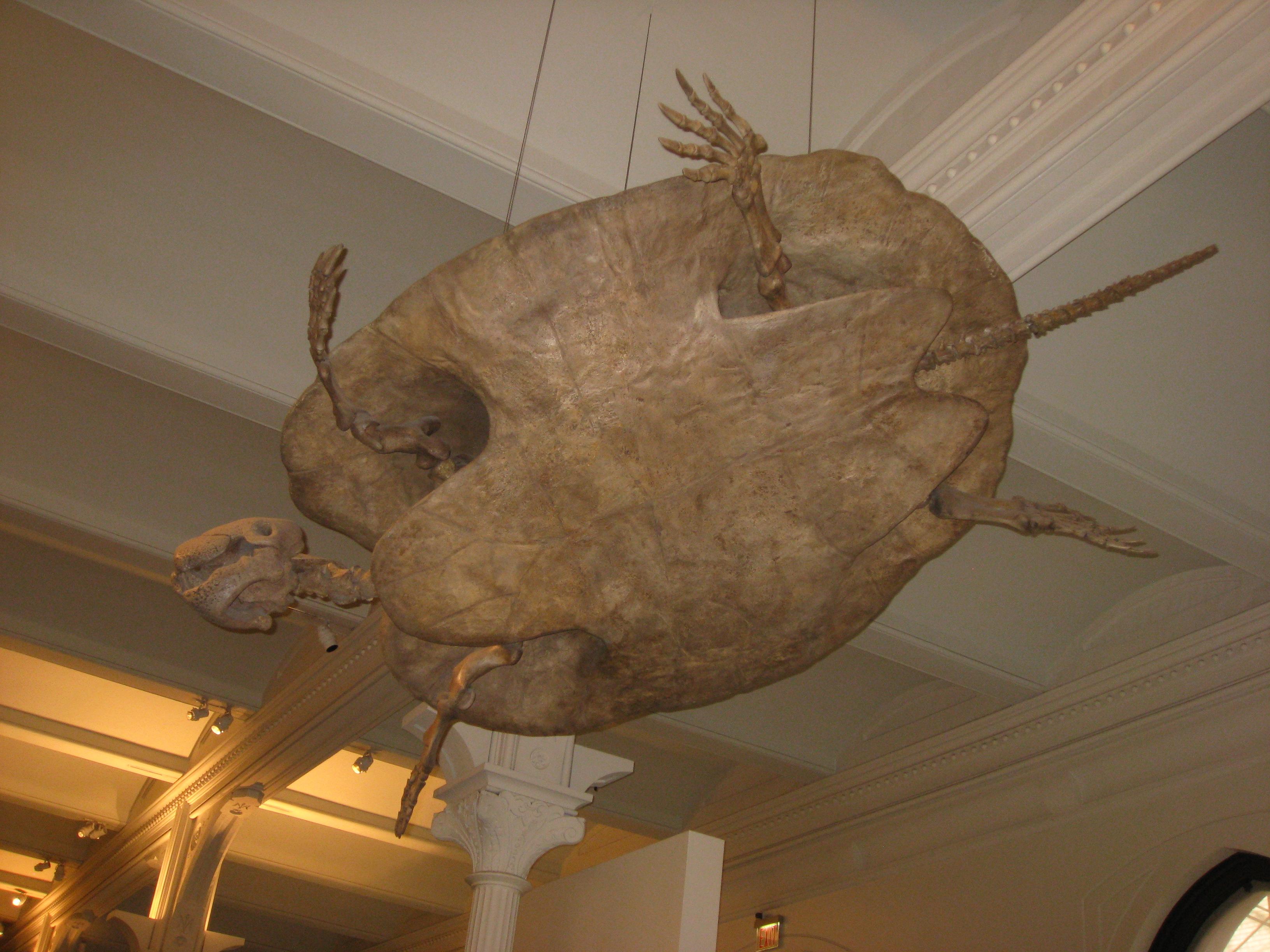 AMNH20141114f