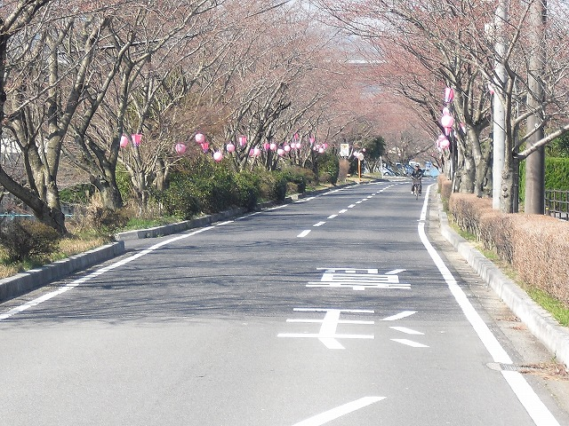 H27.3.27太岡寺畷さくらCIMG2160