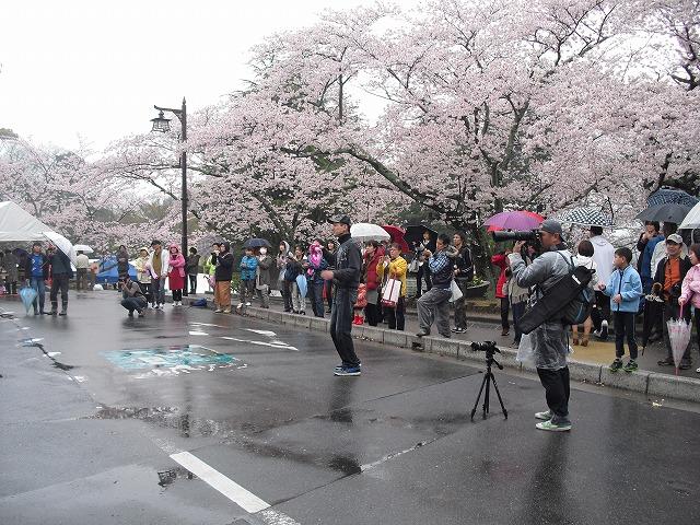 H27亀山城桜まつり観客