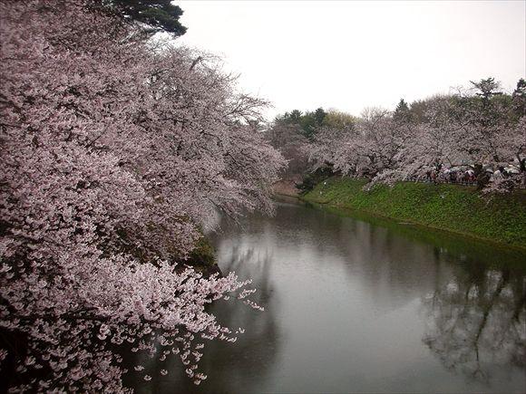 2013.05.04弘前城さくら005