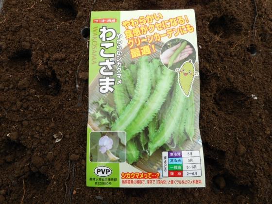 150405 シカク豆①