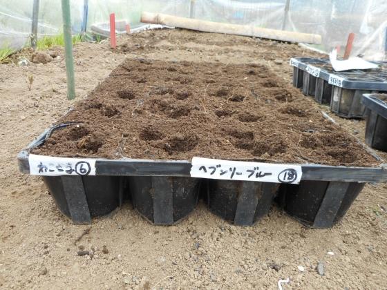 150405 シカク豆②