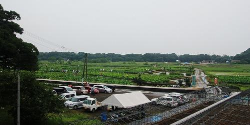 IMG_4501-crop.jpg