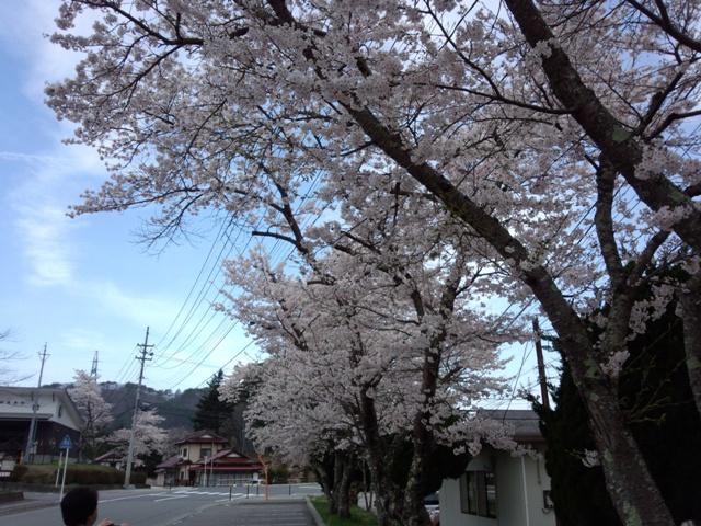 桜0420