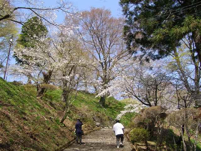 亀ヶ城10505