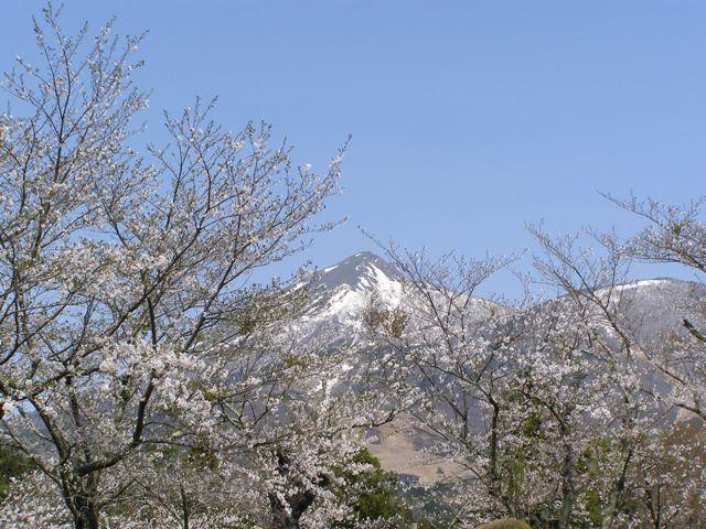 亀ヶ城30505