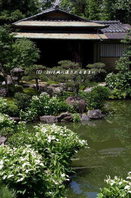 2015年6月 京都・両足院 半夏生(はんげしょう)7