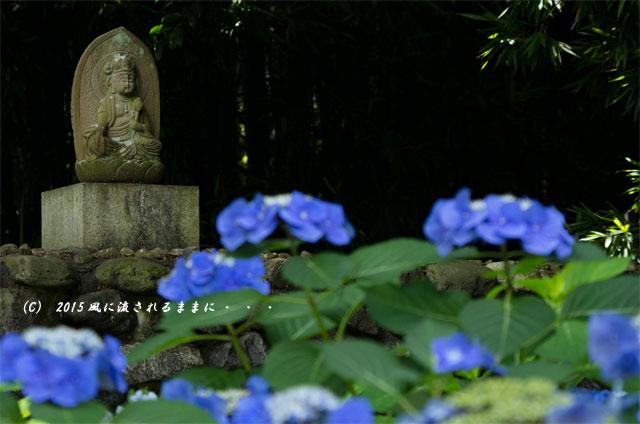 2015年6月28日撮影 京都・勧修寺氷室池6