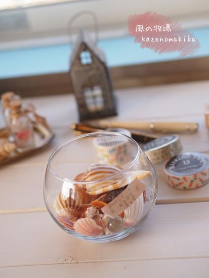 貝殻のコレクション